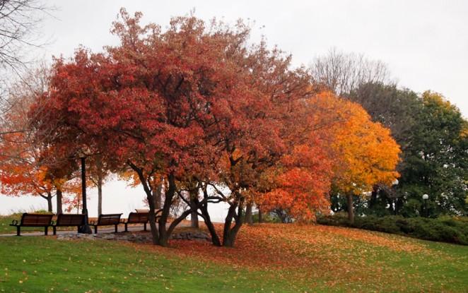 Fall colors in Ottawa